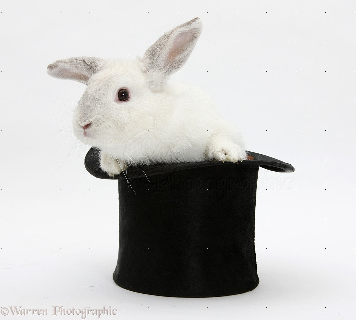 White Rabbit In A Top Hat Photo Wp18784
