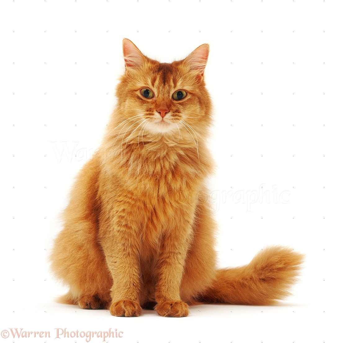 Yellow Tabby Cat Names