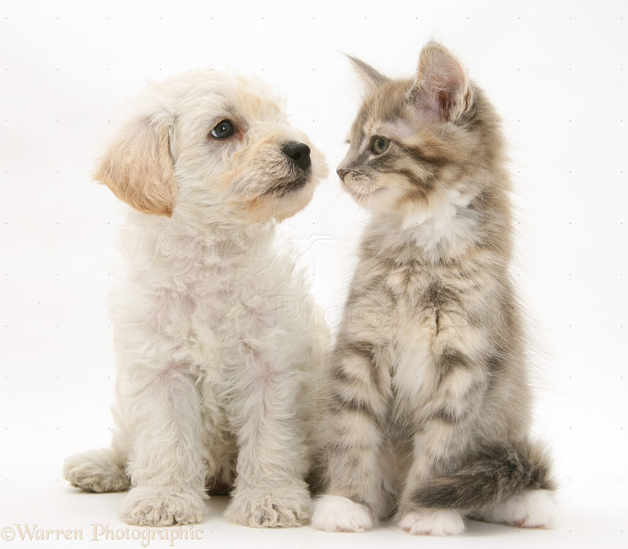 Cute Photos Of Dogs And Cats