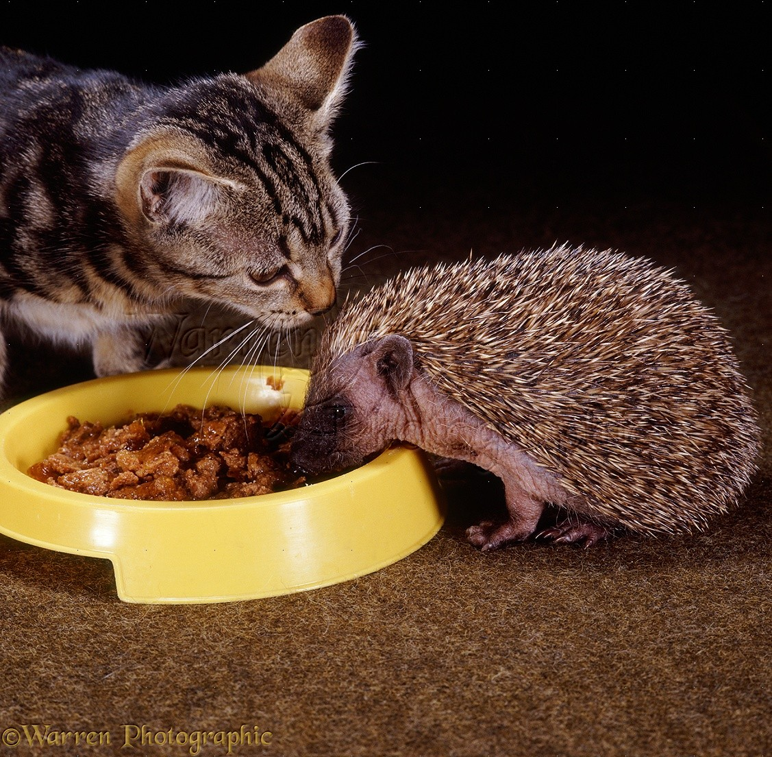 Cat And Dog Eating Food