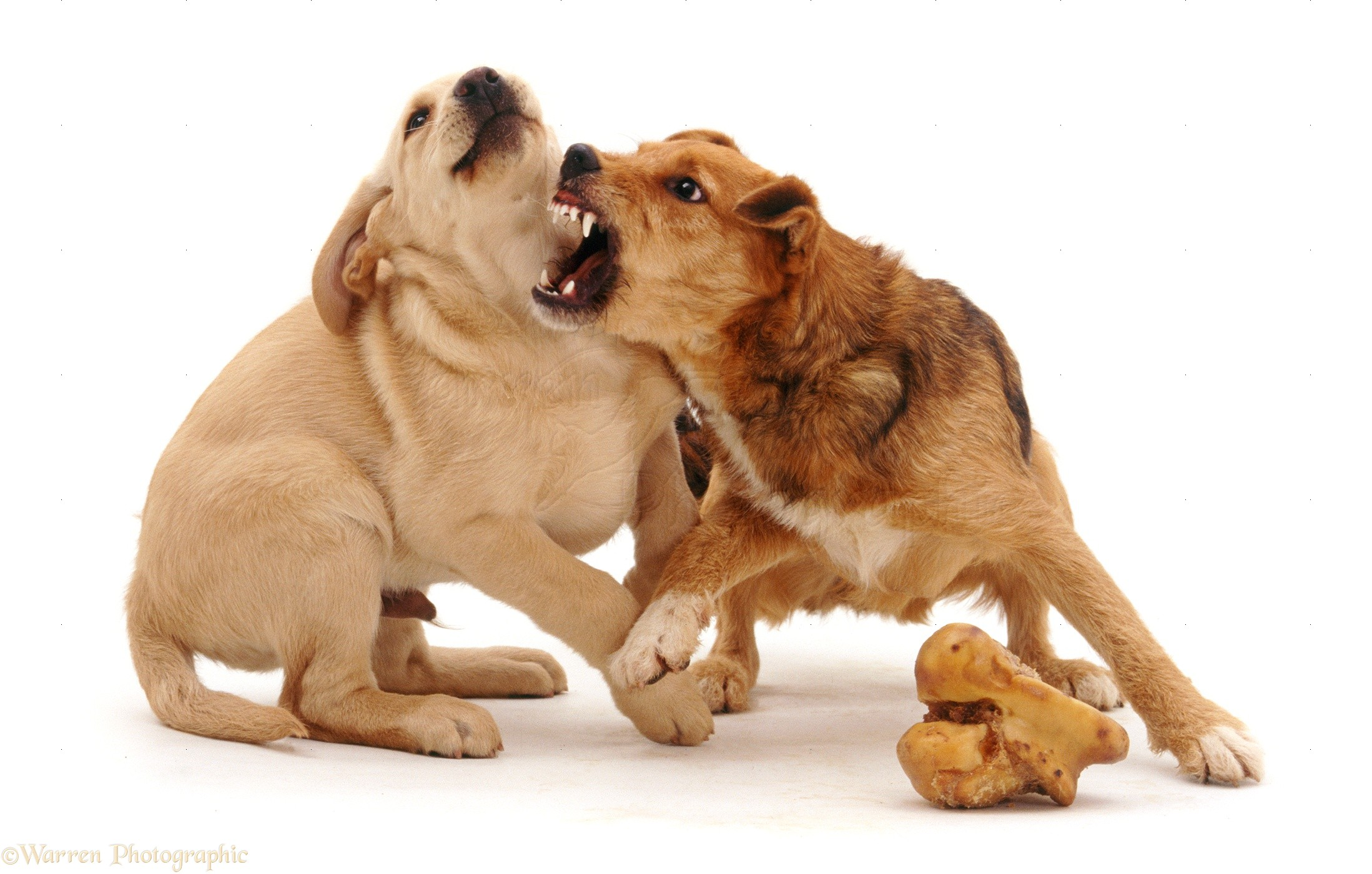 Dog Food Aggression Video
