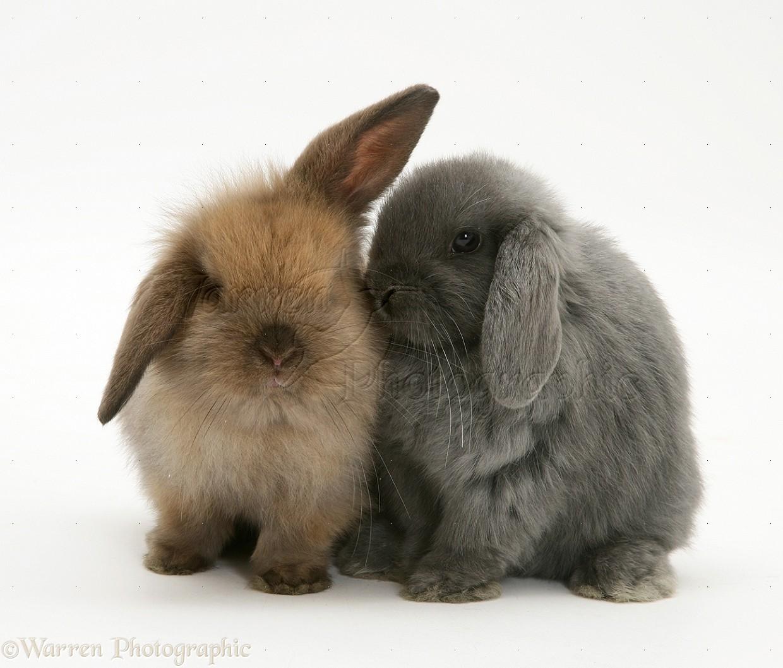 Barbi Brown Rabbits 2015 | Personal Blog