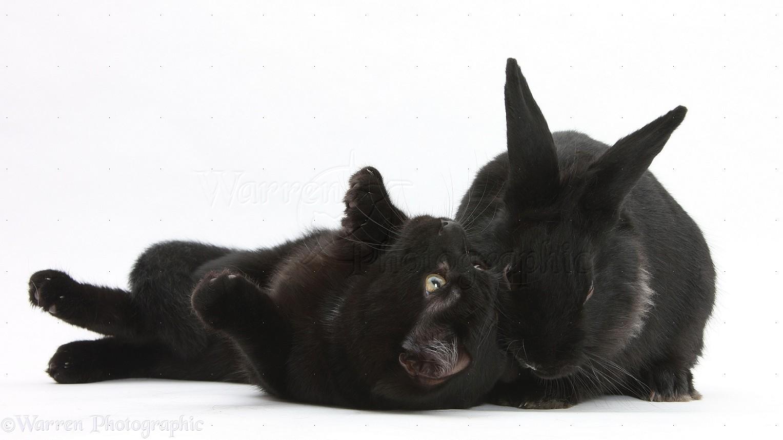 Pets Cat Dog Rabbit