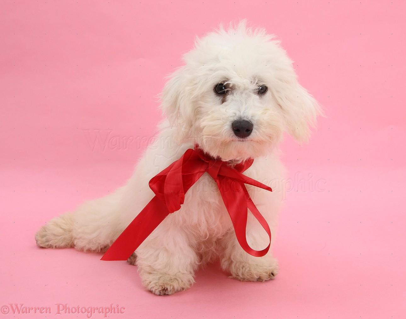 Dog Photography Uk