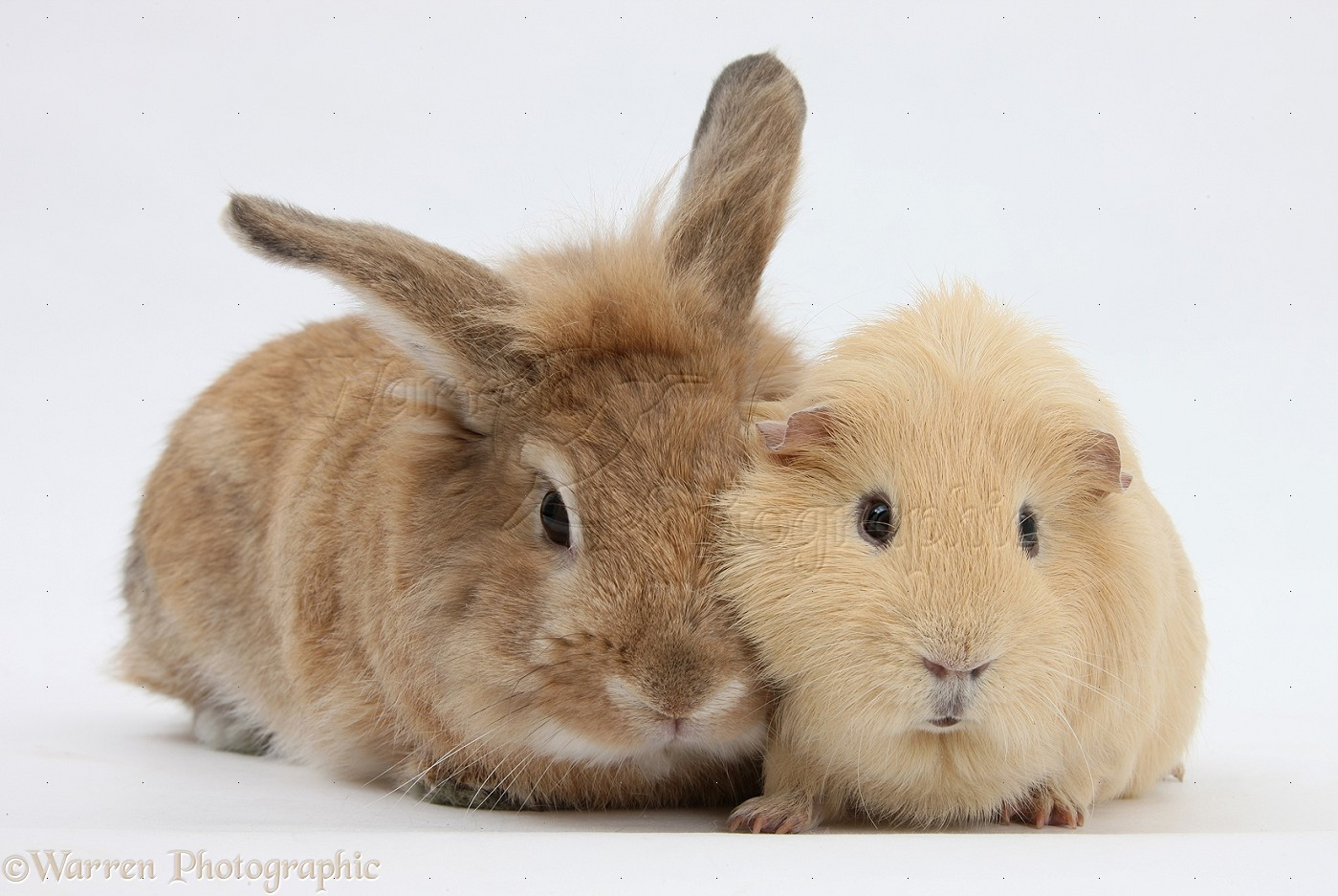 Pets: Sandy rabbit and...