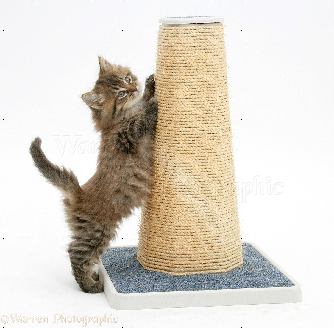 371302414714 also 3639668 furthermore Dal Maglione Al Cesto Per Il Pet also Watch furthermore Great Cat Products. on diy cat scratching post