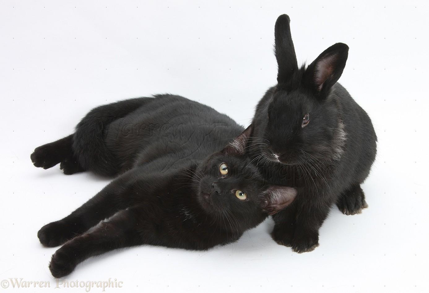 Whte Ginger Black Cat Together