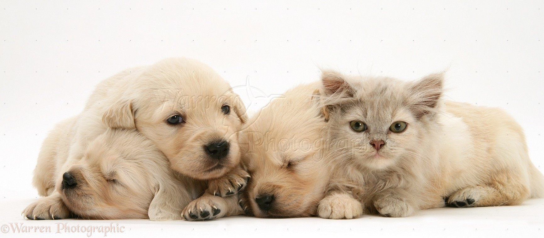 Cute Baby Kittens And Puppies Sleeping cute baby puppies related ...