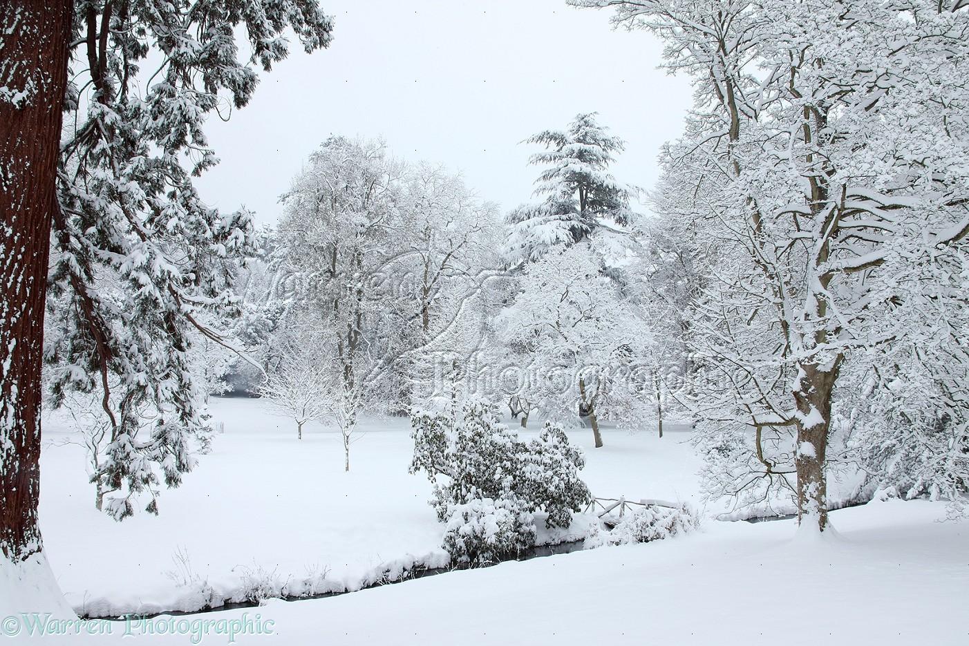 Wp22642 snowy scenery in albury park surrey england