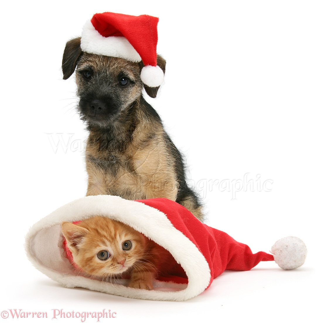 top 5 reasons tis not the season to bring home a new pet grey