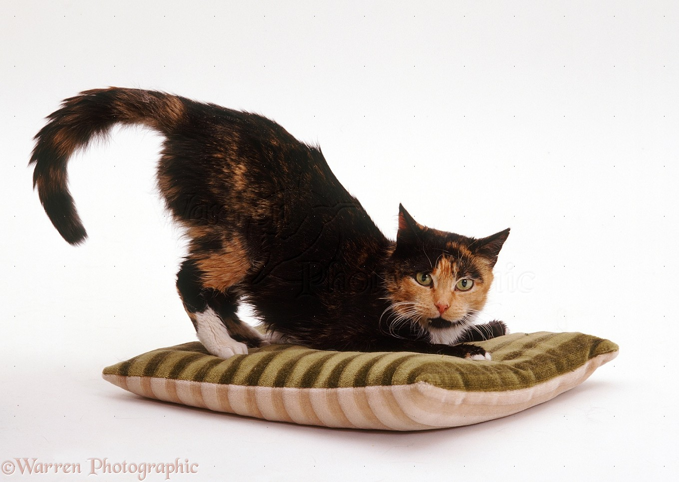 Physiotherapy For Cats Uk
