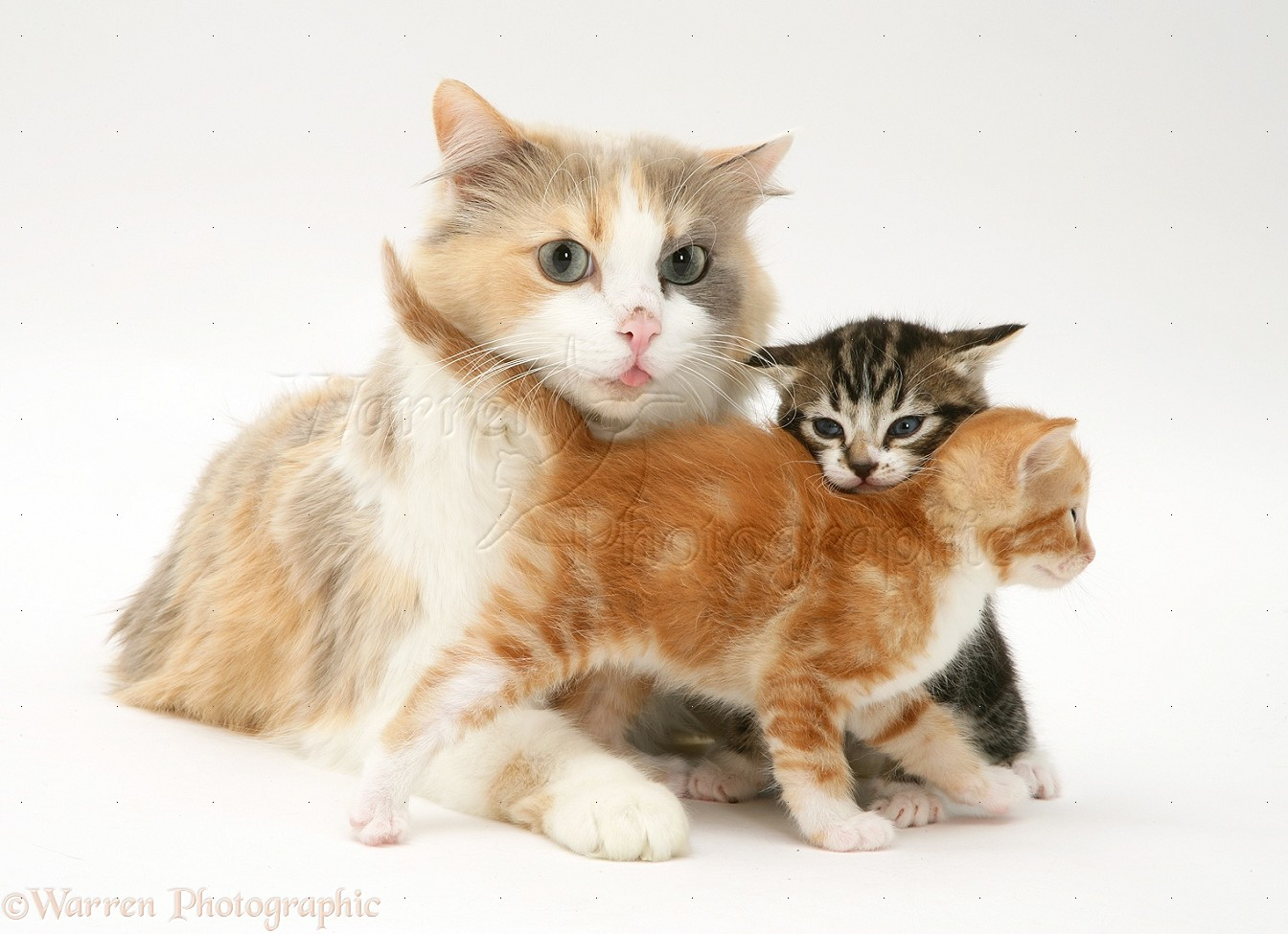 cat and kitten pictures