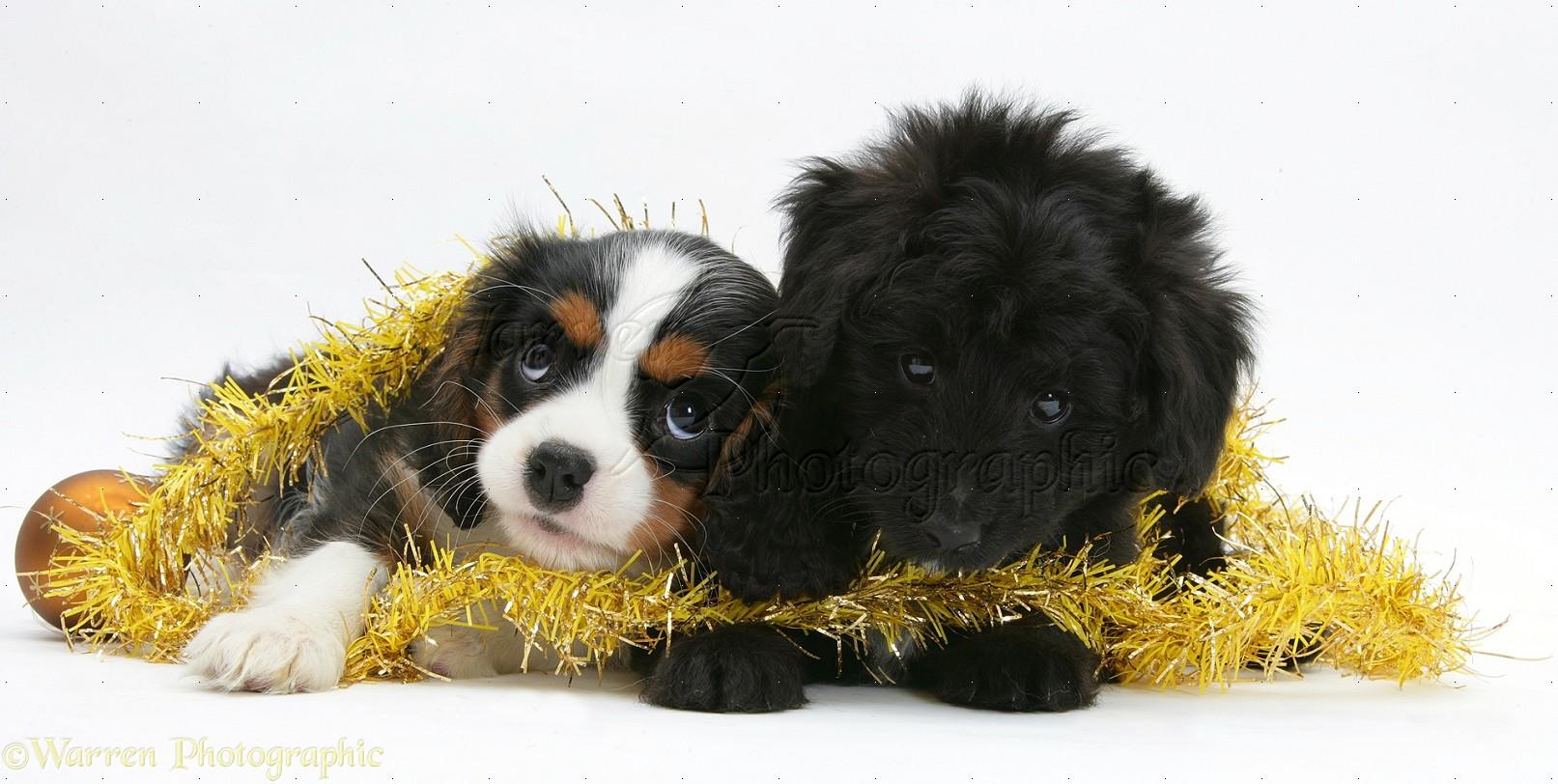 Poodle Christmas Decorations