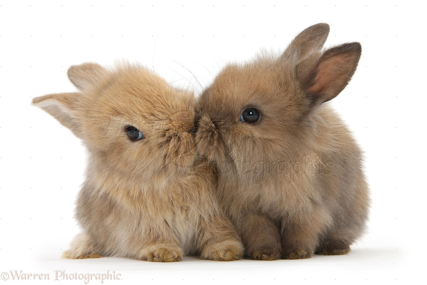 Getting a Pet Rabbit What to Expect  House Rabbits