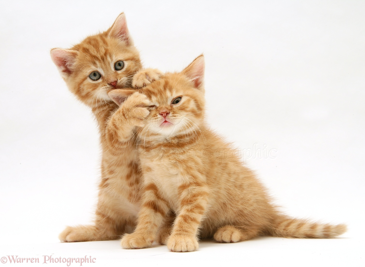 Cats And Dogs Best Friends Pictures