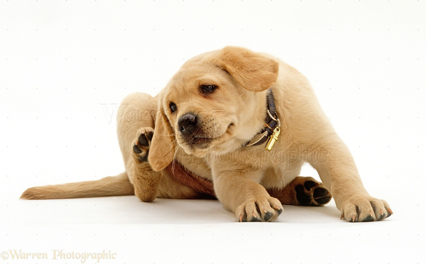 What to Do if Your Puppy Is Scratching and Itching