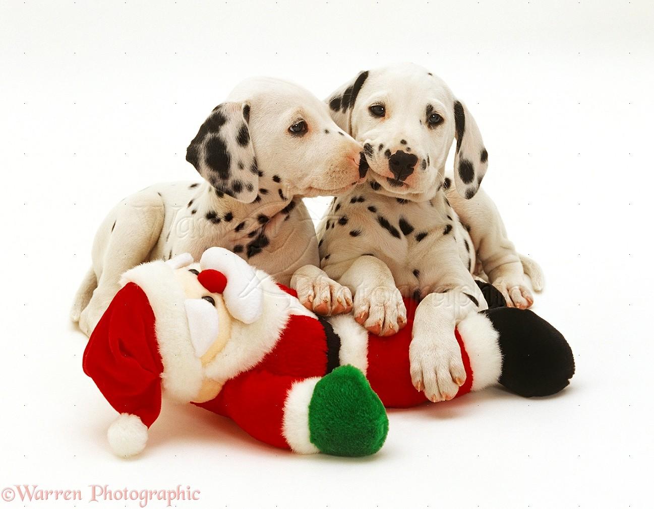 Dalmatian Puppy Dog Toy