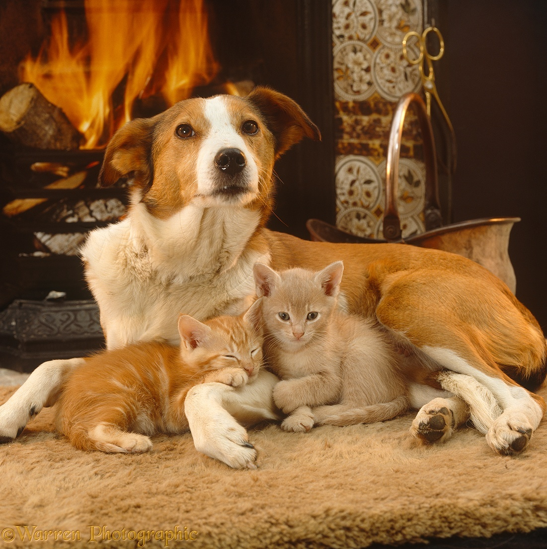 Image result for fireplace with kittens