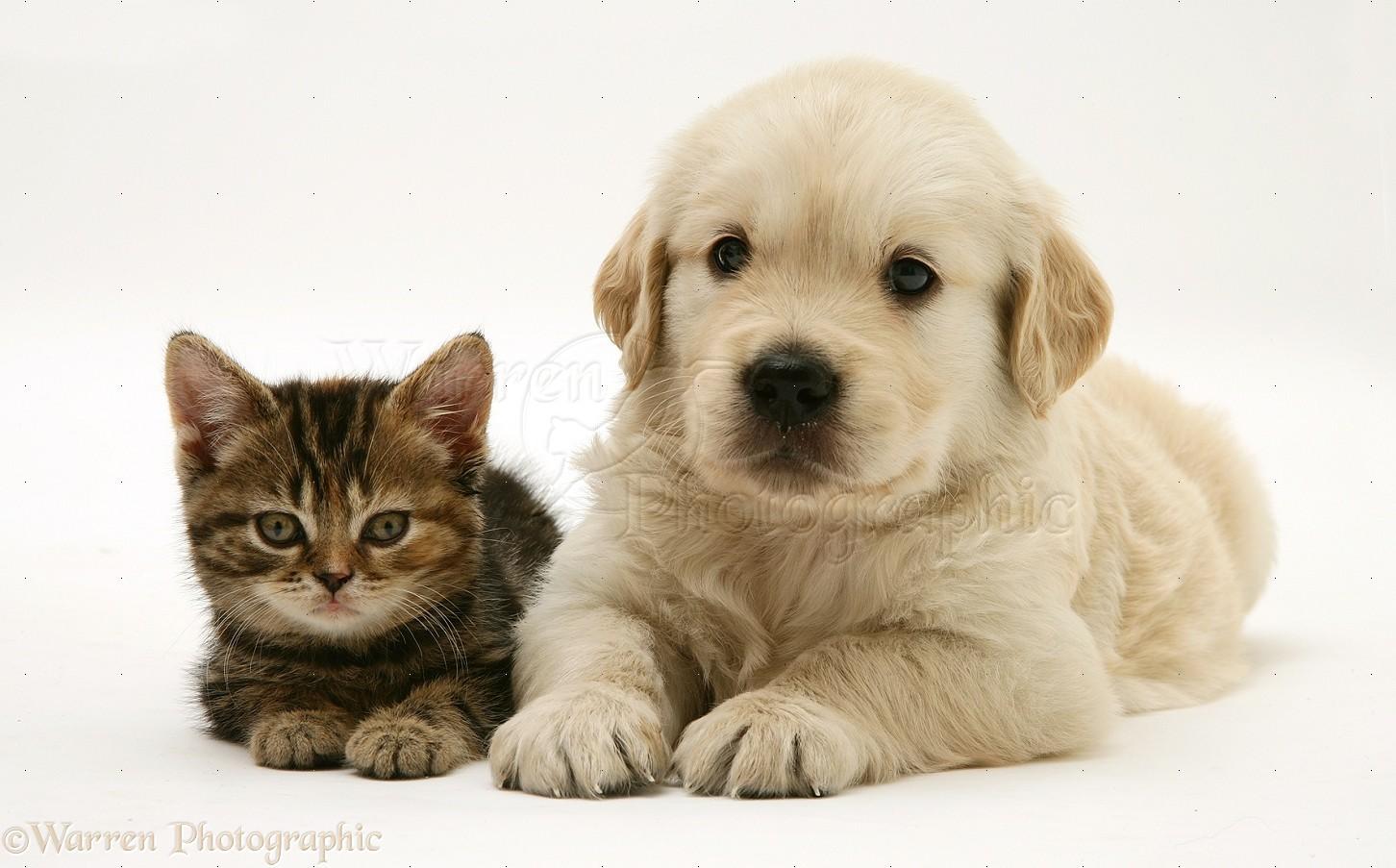 New Puppy With Senior Dog