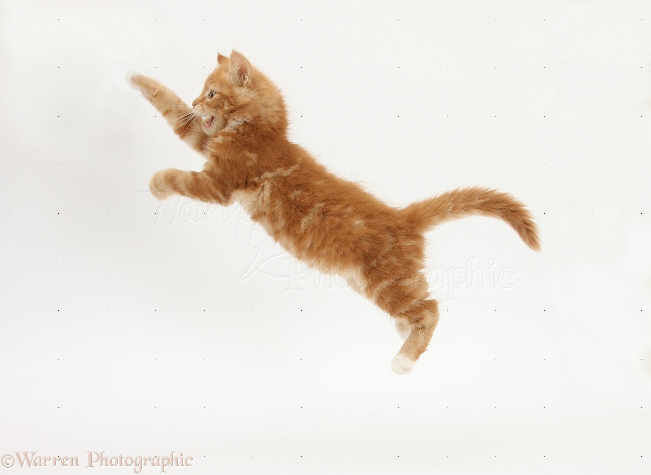 Cat Video Jumping