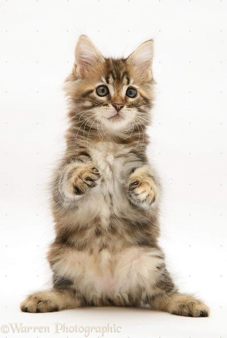 cat loader for sale