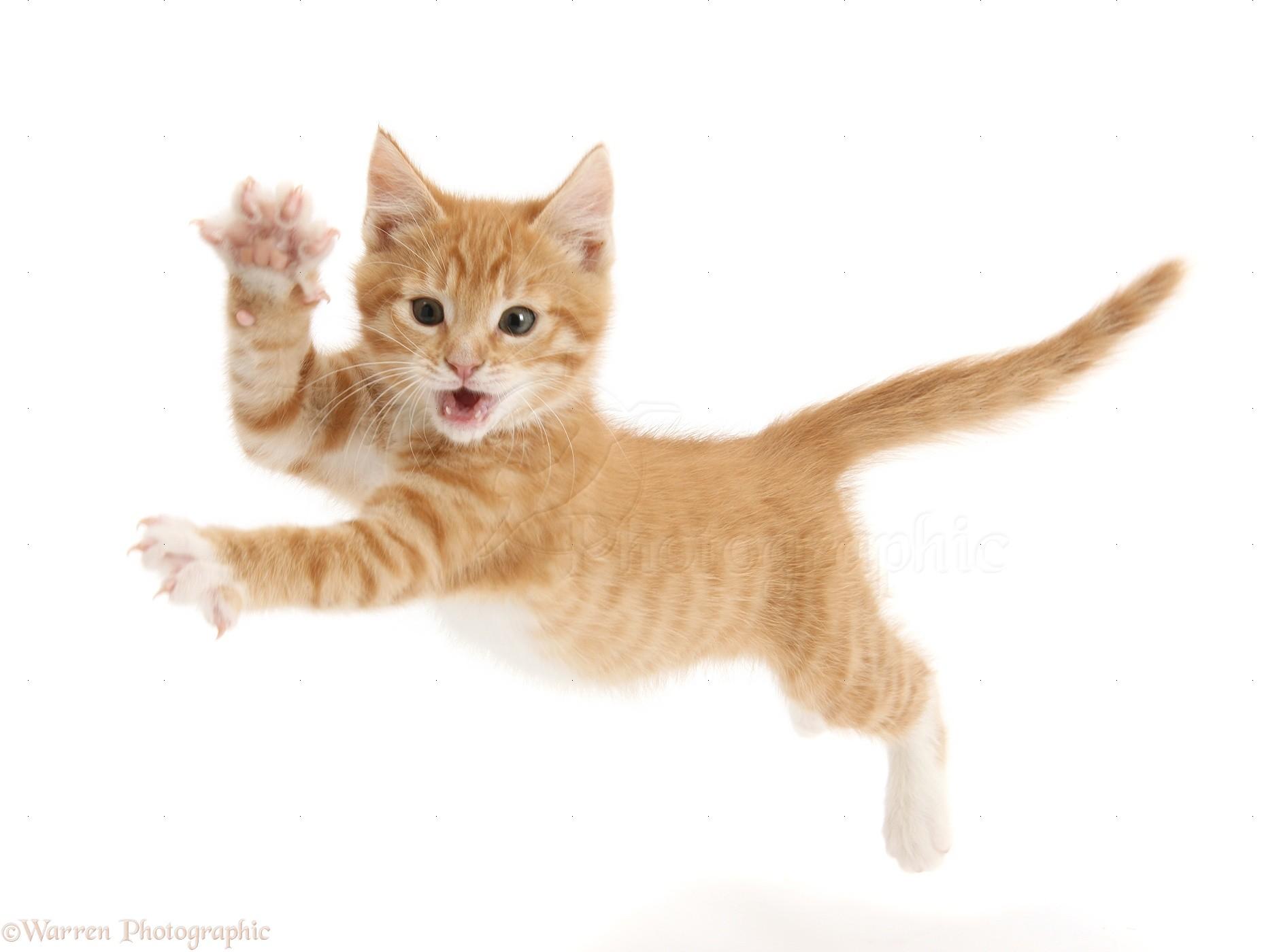 Cat On Arm Gif