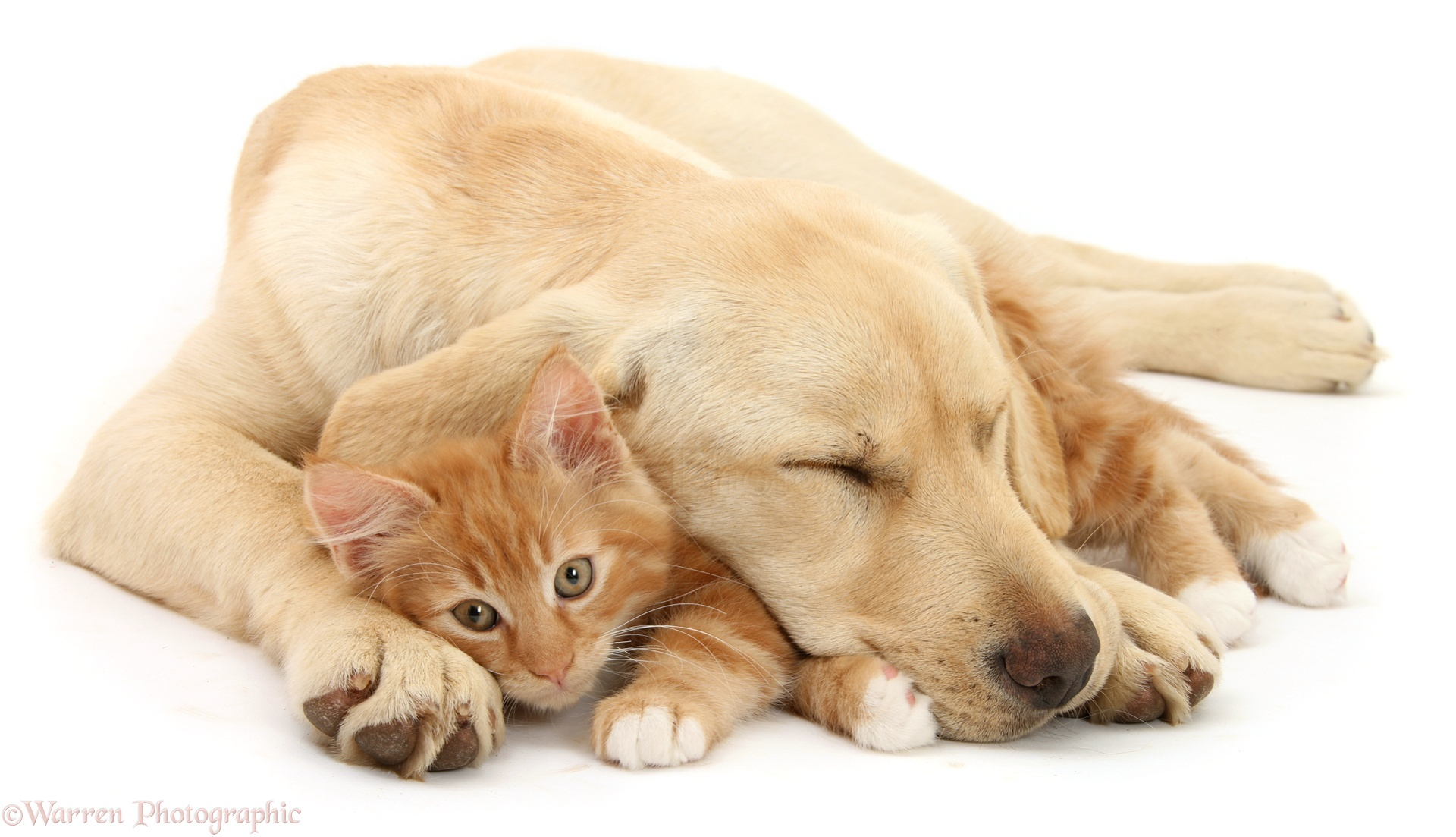 I Love Cats And Dogs