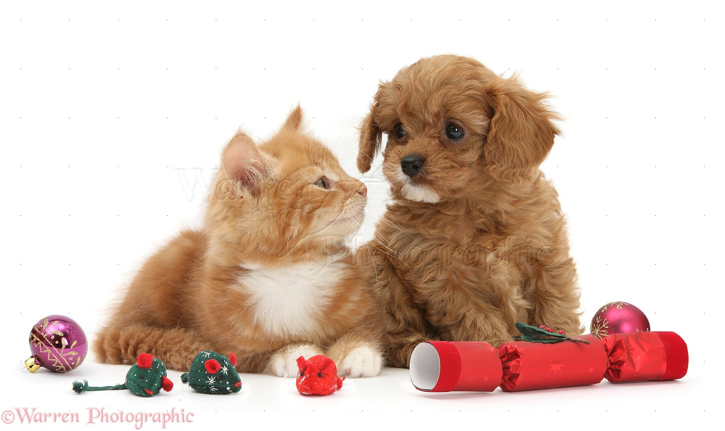Displaying 15 gt images for cute christmas puppies and kittens