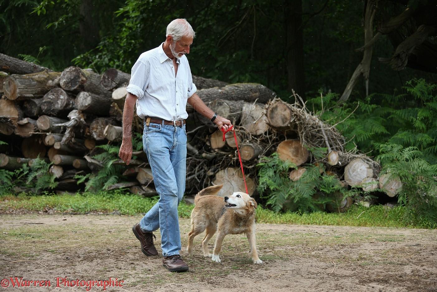 Man walking an older dog
