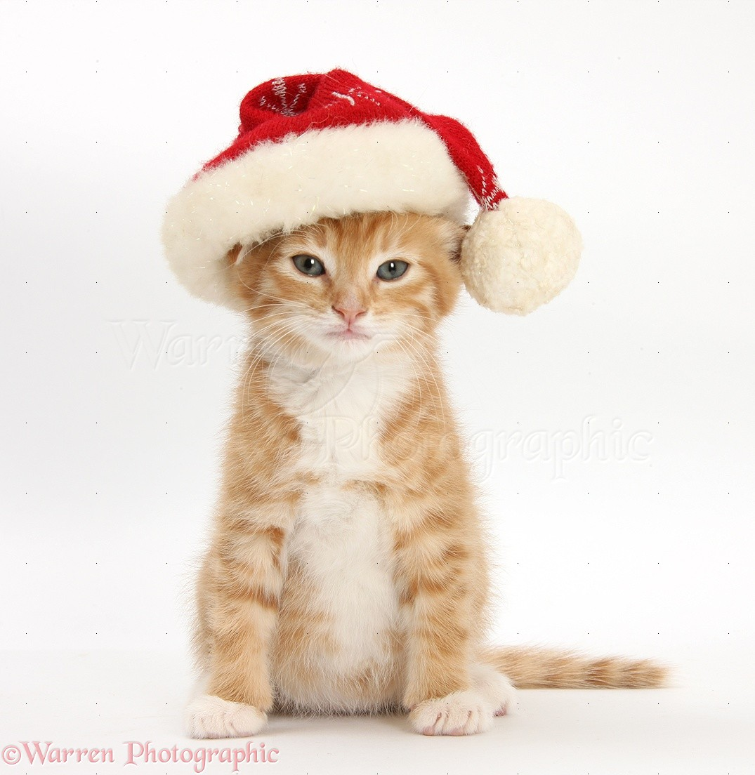 Cat Santa Hat Pets At Home