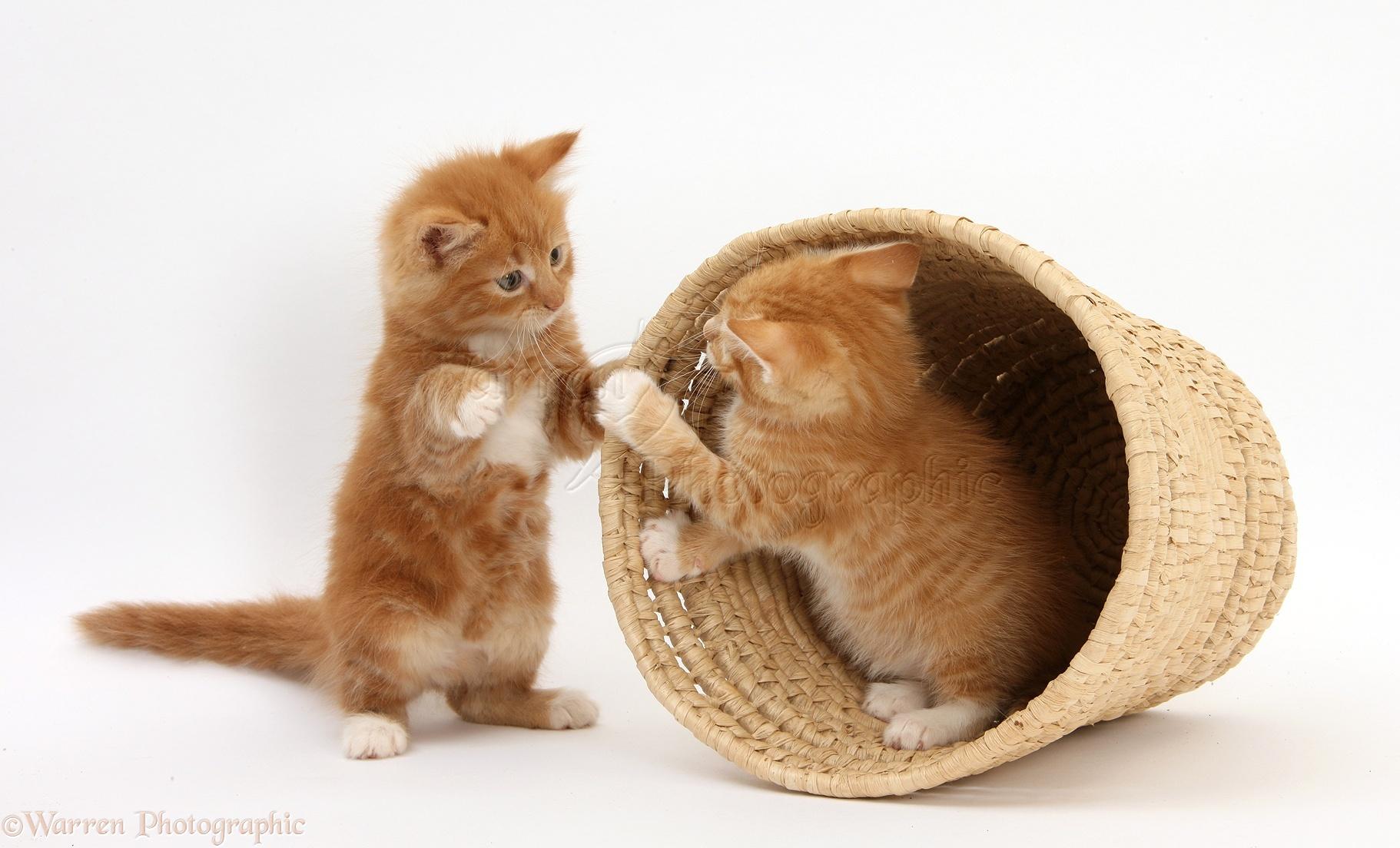 Kittens Playing Gif