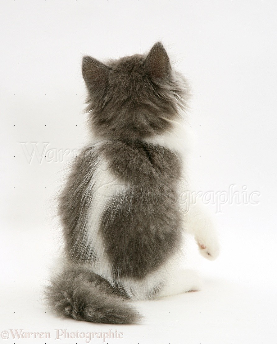 Cats Back View