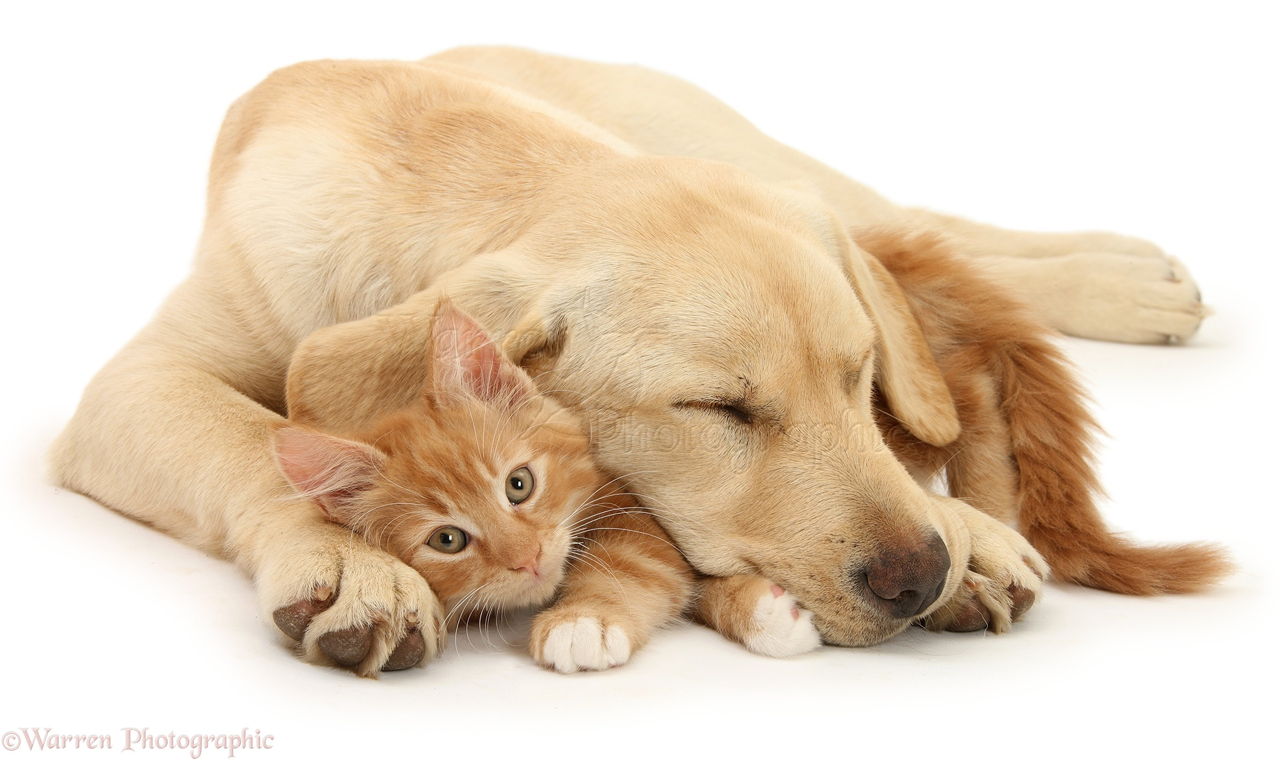 Sleepy Dogs And Cats Video