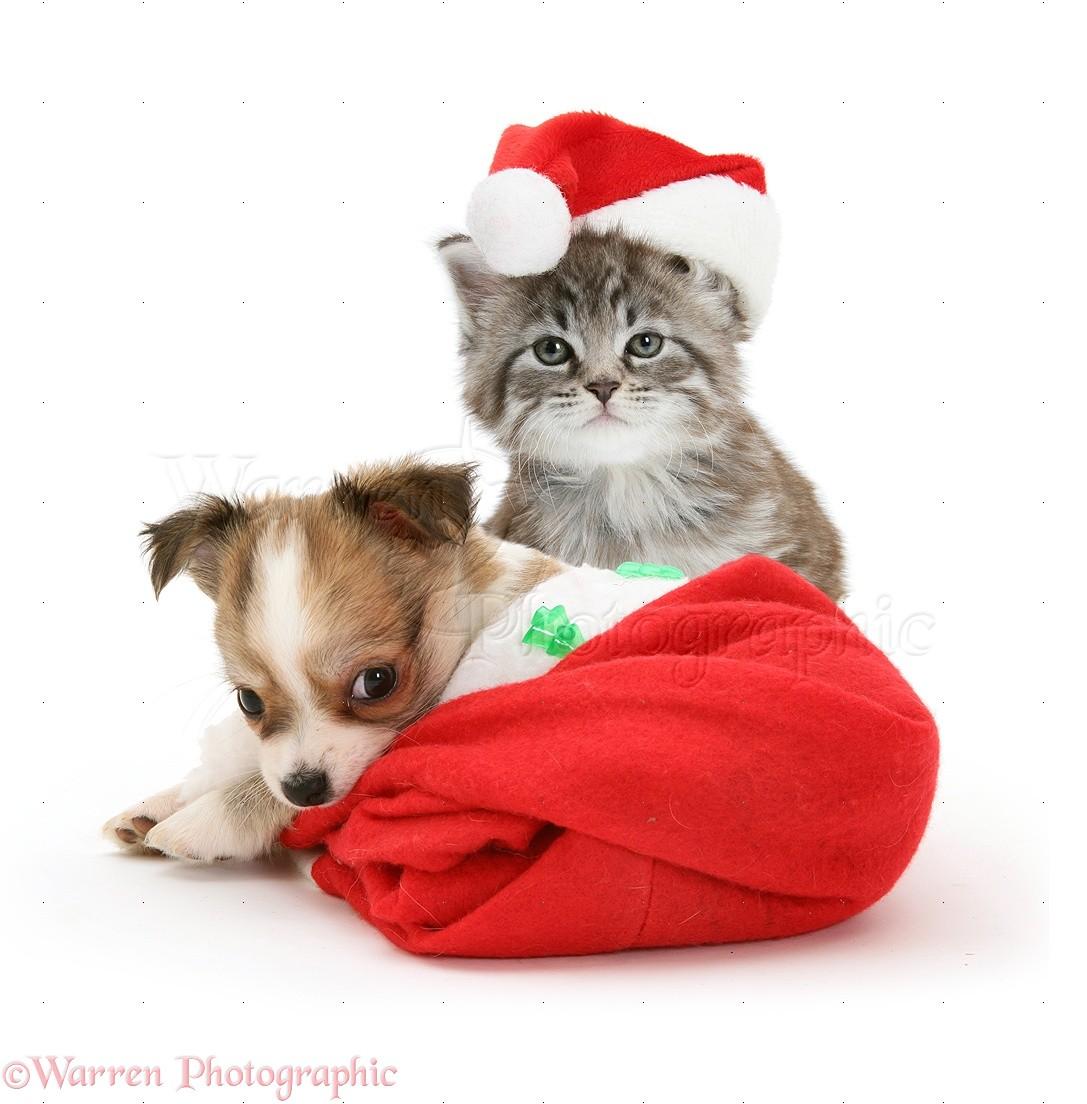 Cat With Santa Hat Gif