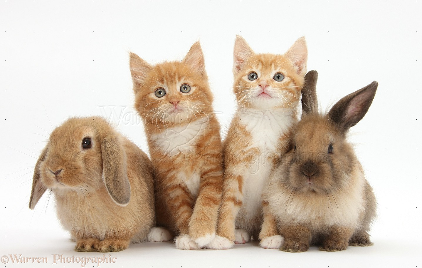Happy Easter Cats Pictures