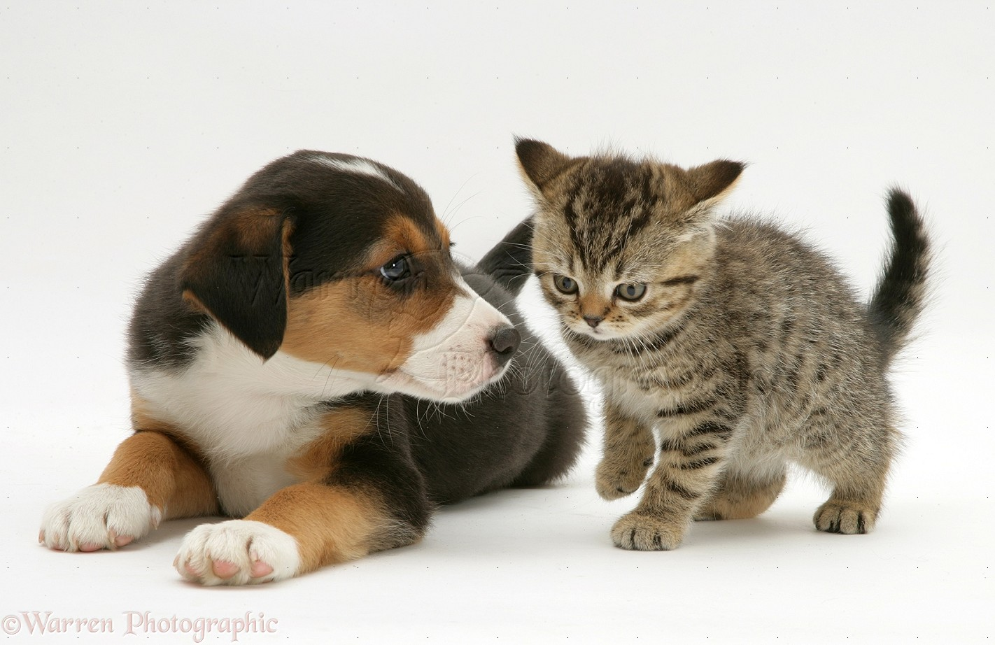 Dog And Cat Transparent Background