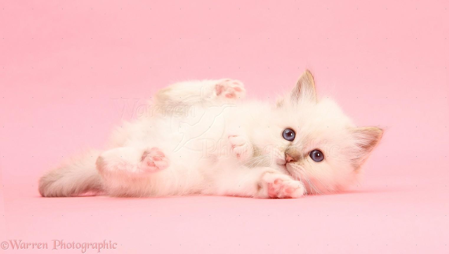 cute cats wallpaper hd