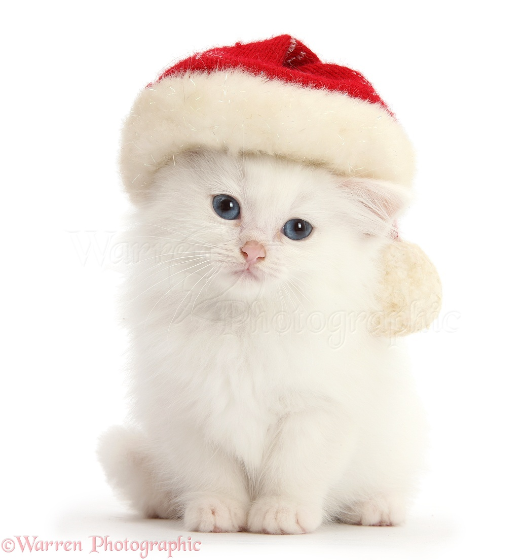 Cute White Cat Gallery
