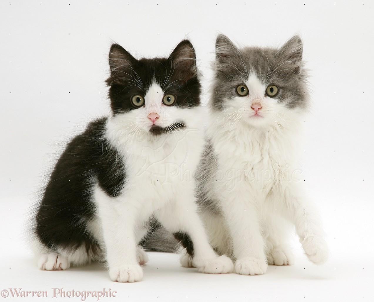 Black Cat Ottaqa