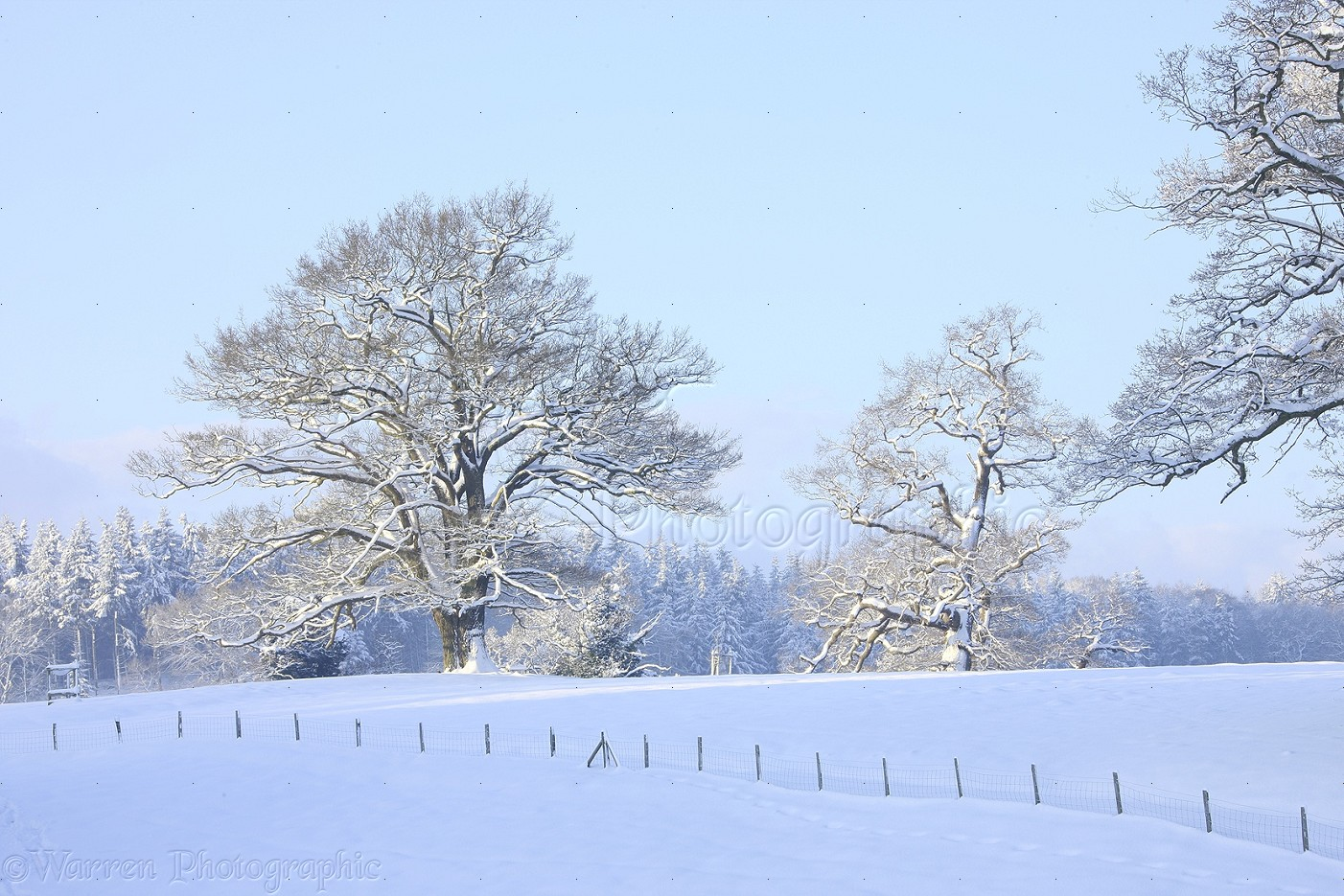 e2f5bc87204d6 Oak trees with snow in Albury Park photo WP27515