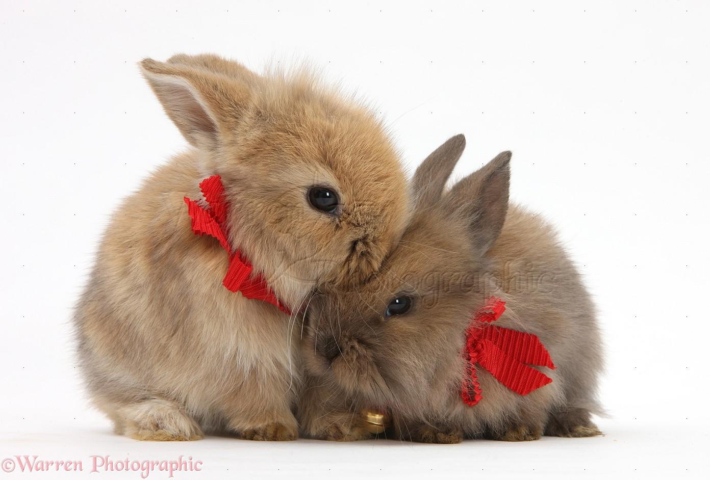 зайчики целуются фото преданно служила