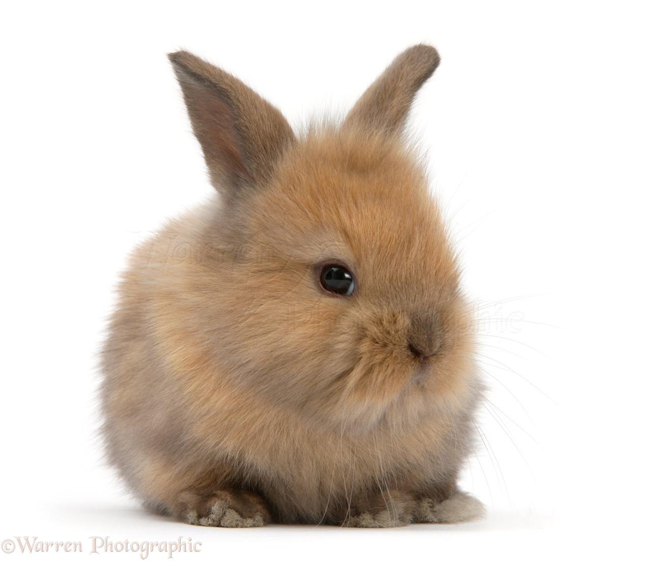 Baby Bunny Rabbits