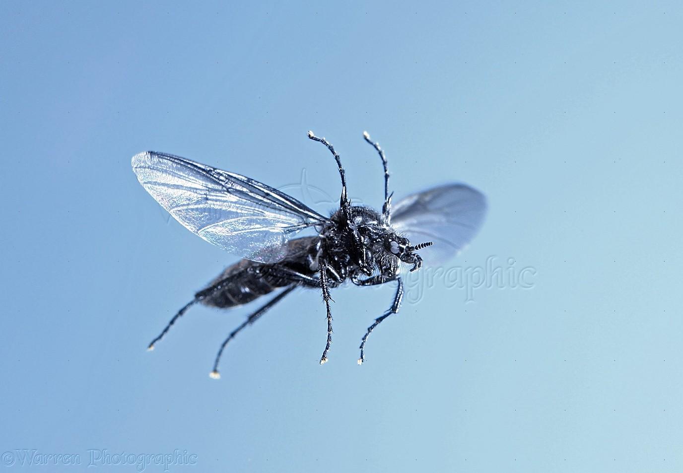 St. Mark's Fly