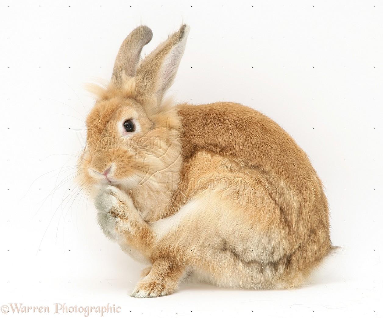 Website van Sixtiesband The Rabbits