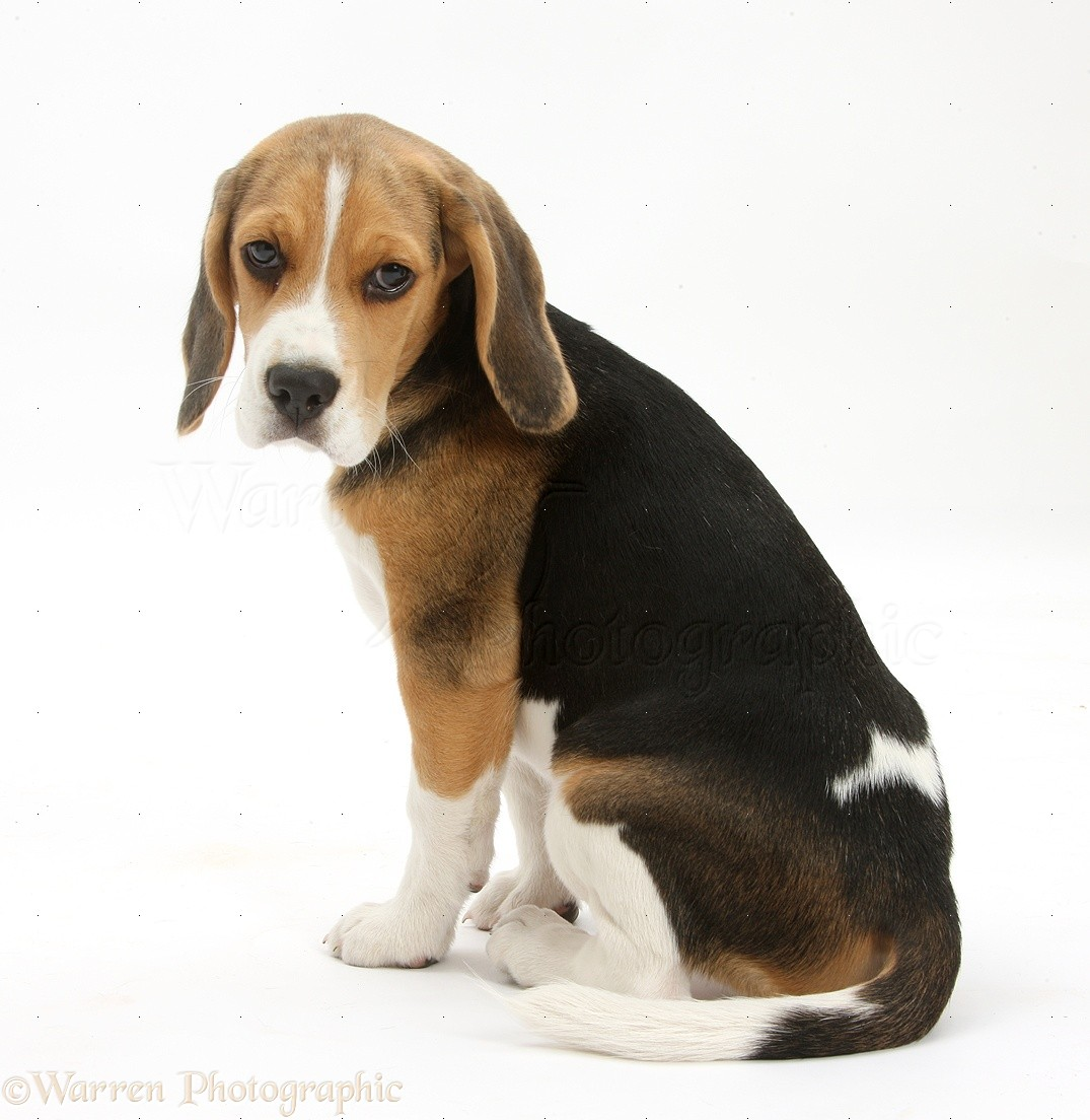 dog breeds alphabetical friendly dog breeds breeds of dogs snow dog ...