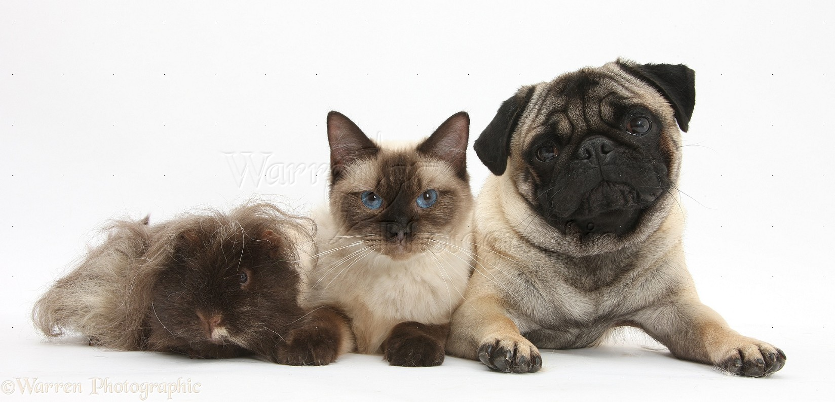 Cats And Dogs Picture Background