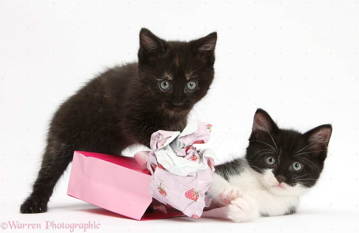 Presents For Cats Uk