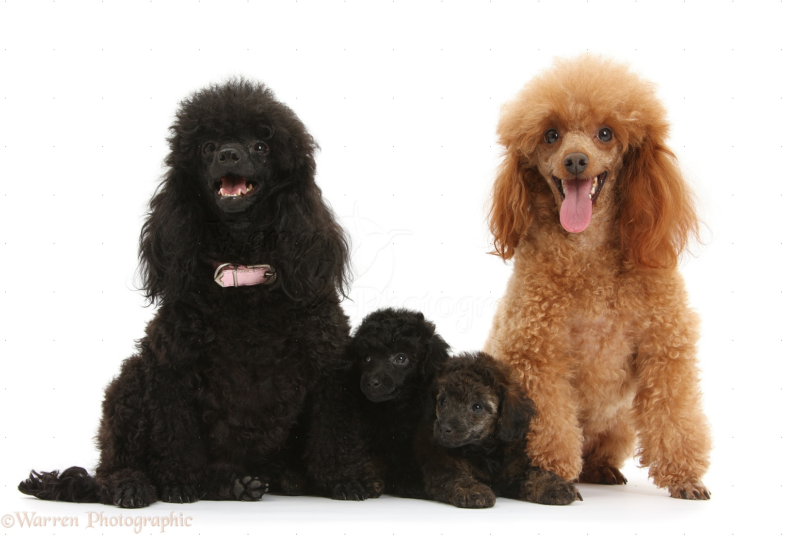 Picture Of Family And Dog In Black