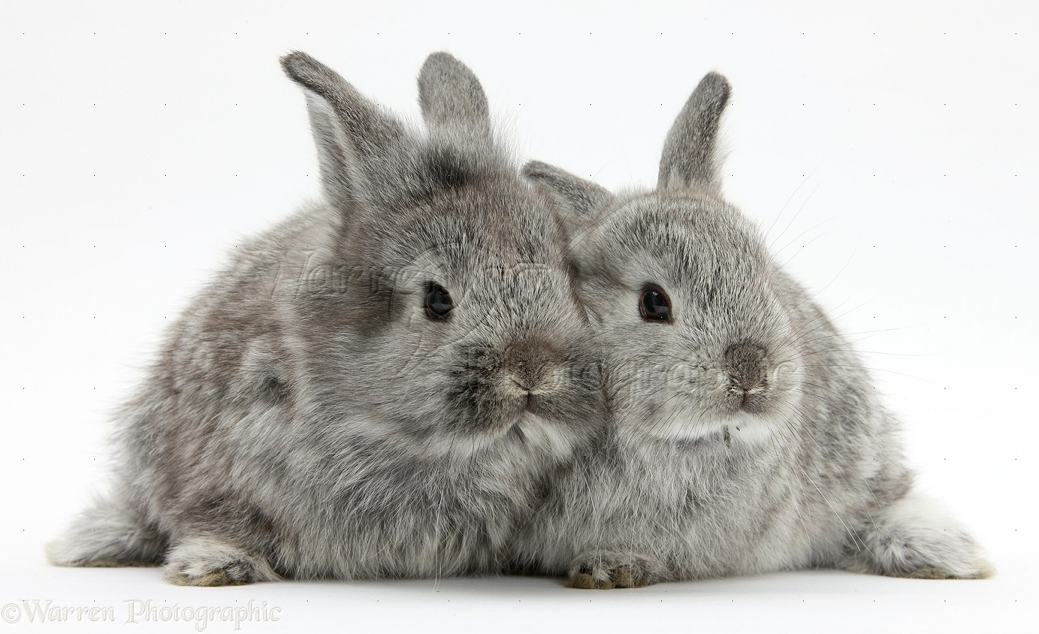 Images for rabbits free