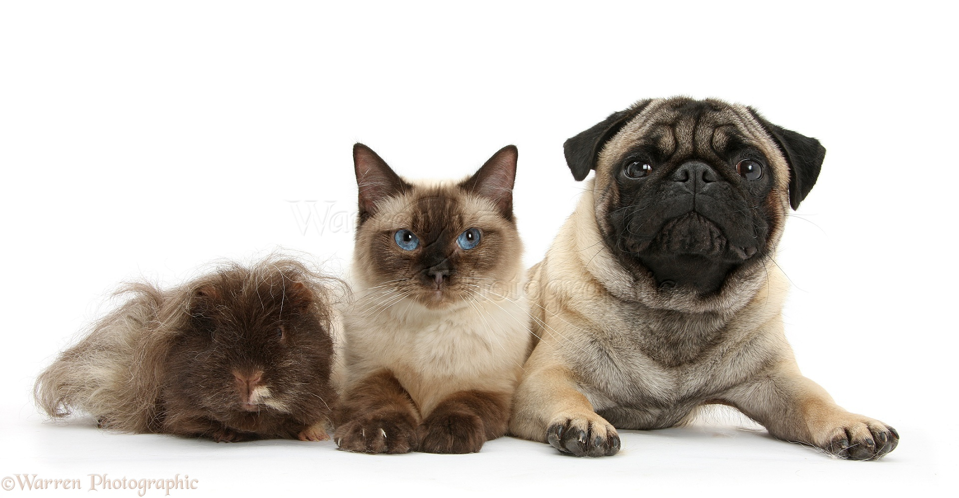 Cute Cat And Pug